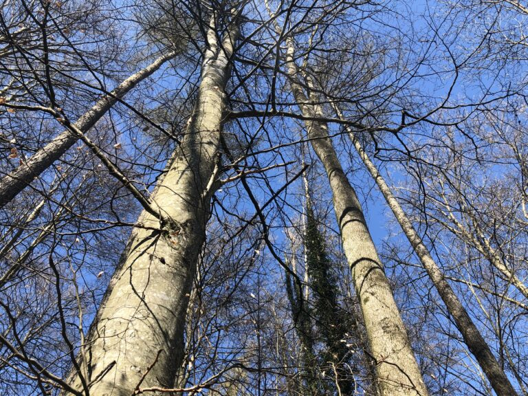 Faszination Bäume, 5.4.20 um Sulgen