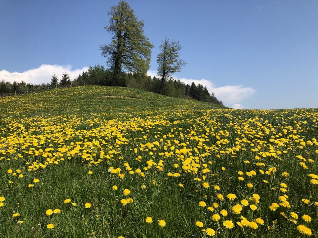 Oberhalb Berg 13.04.2020