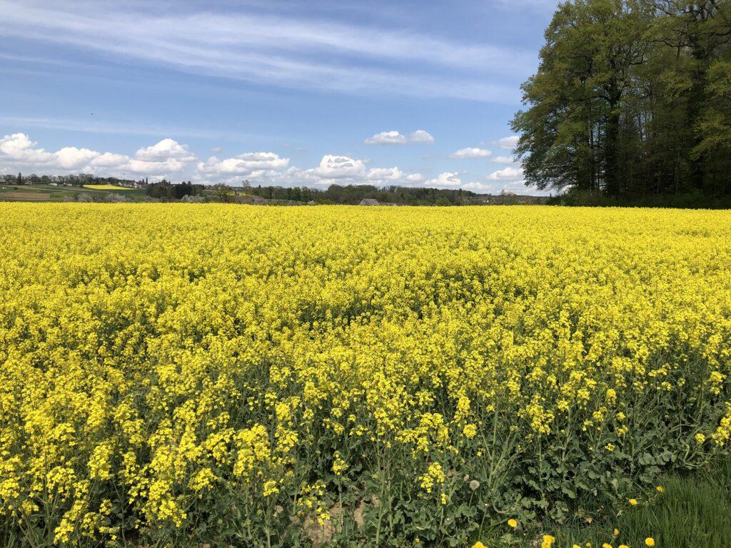19. April 2020 Feld zwischen Leimbach und Erlen